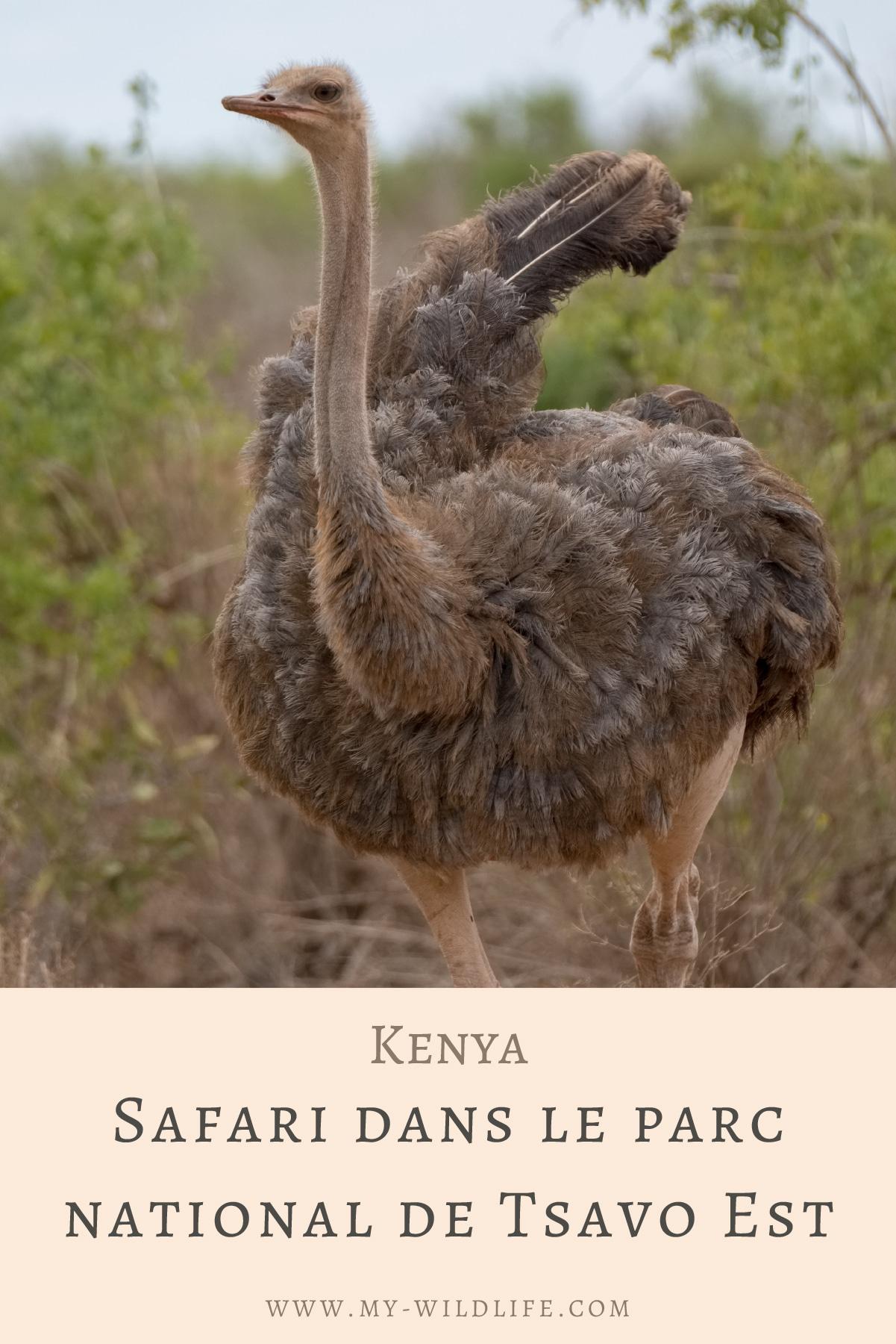 Safari-dans-le-parc-national-de-Tsavo-Est-02