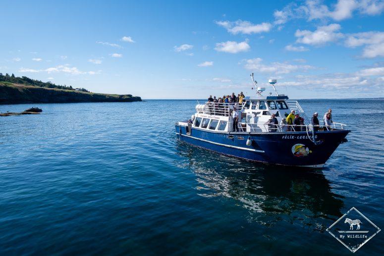 Arrivée d'un bateau, île Bonaventure