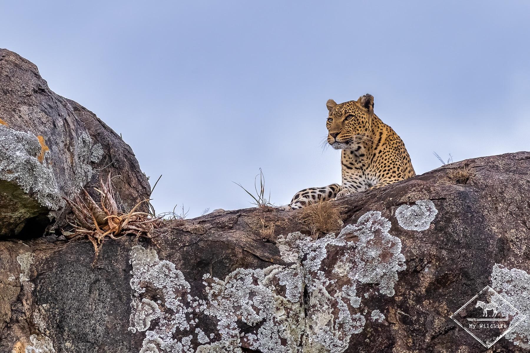 11 jours de safari en Tanzanie