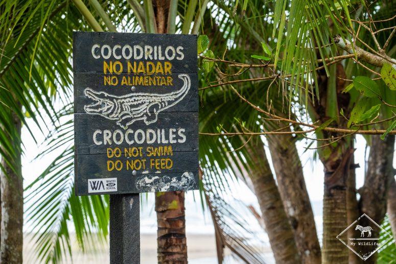 Attention crocodile, parc national Marino Ballena