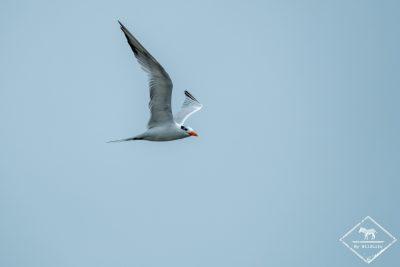 parc-national-marino-ballena-gregoryrohart-0413