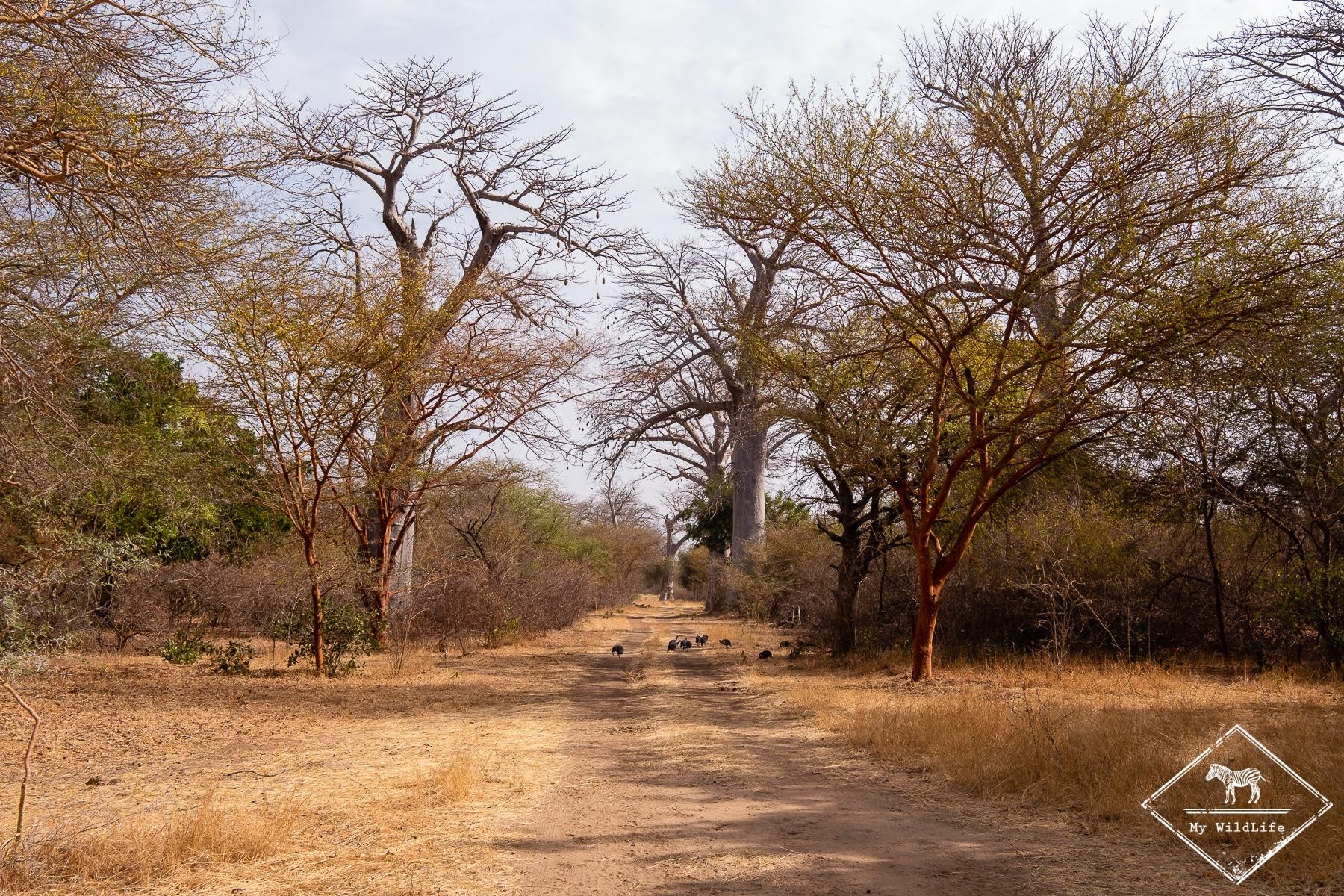 Baobars, Réserve de Bandia