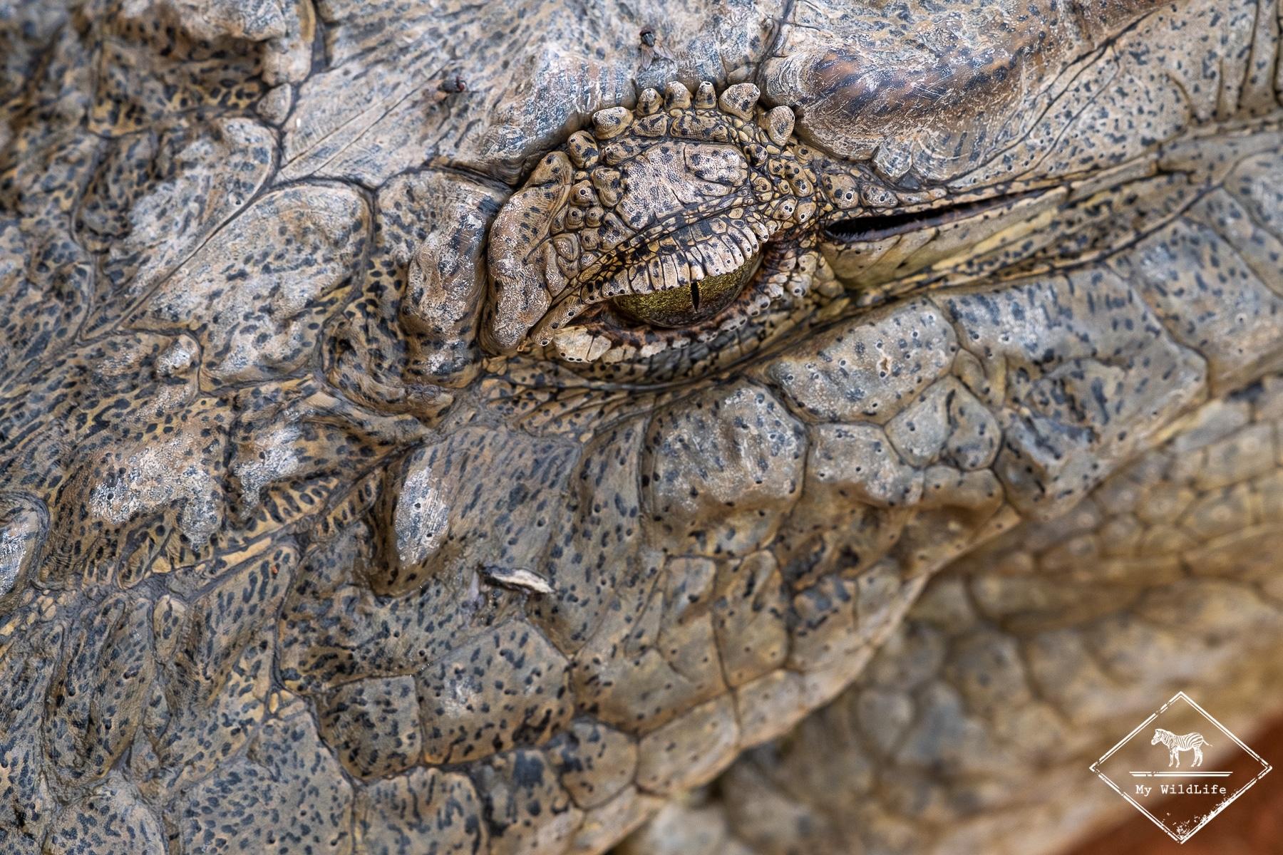 Crocodile, Réserve de Bandia