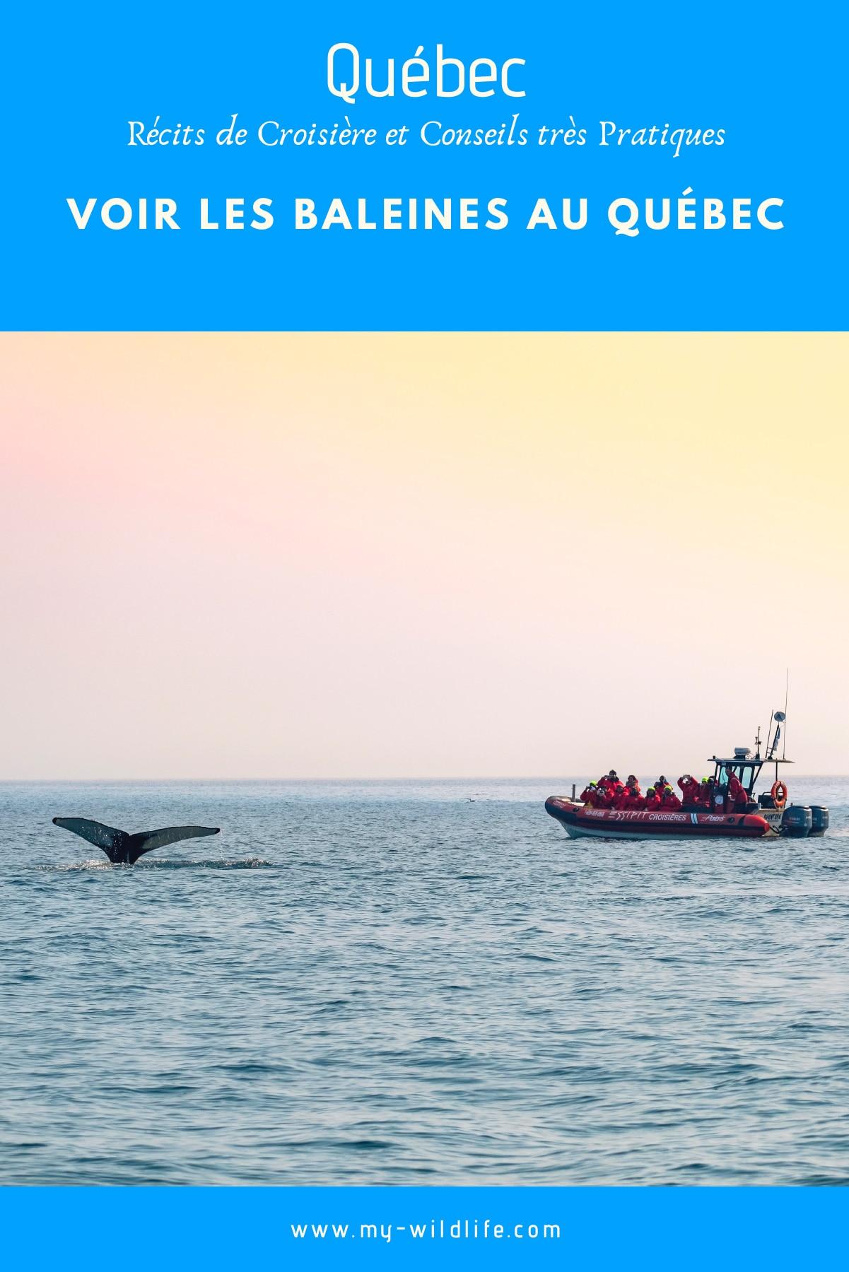 baleine-quebec-01