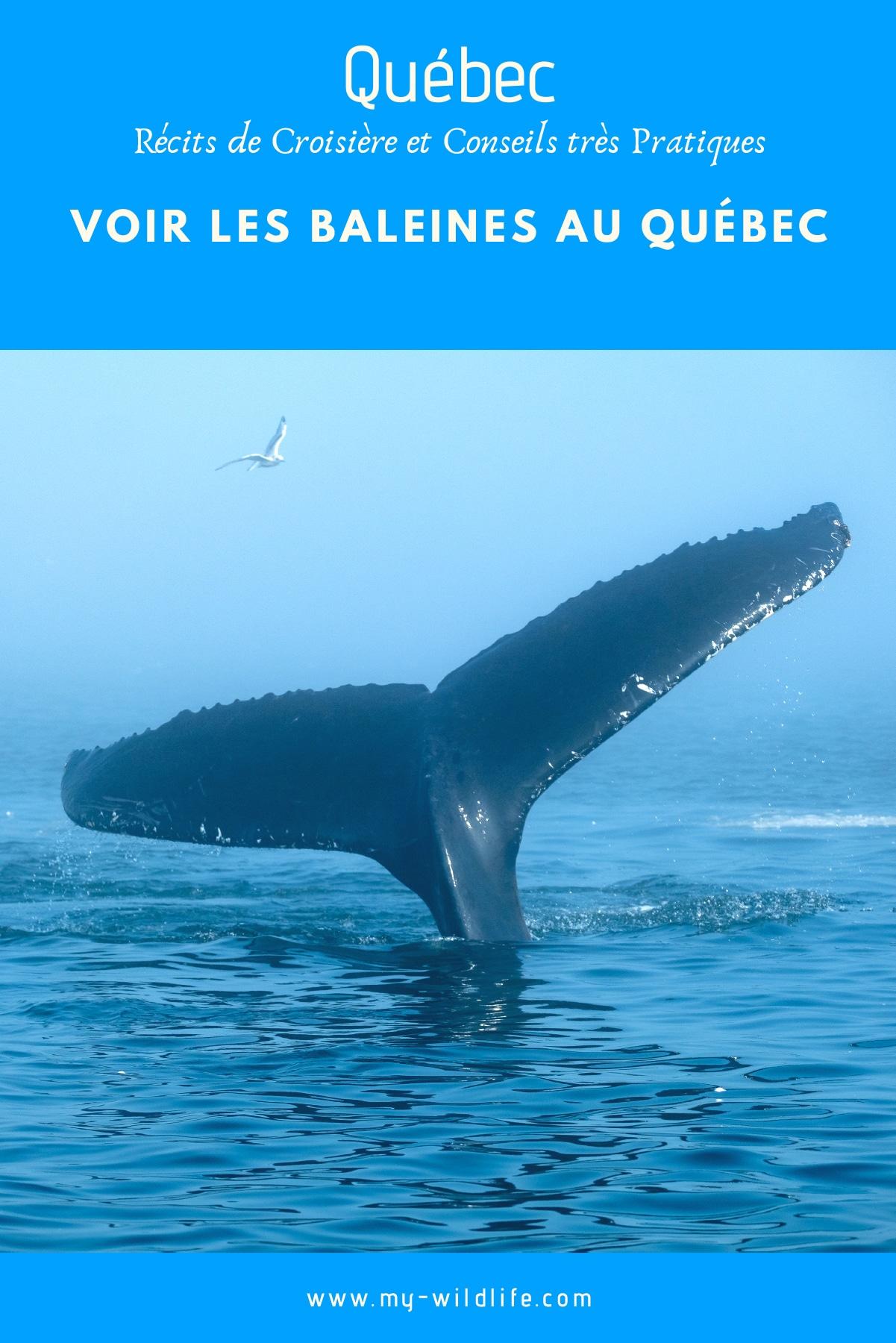 baleine-quebec-02