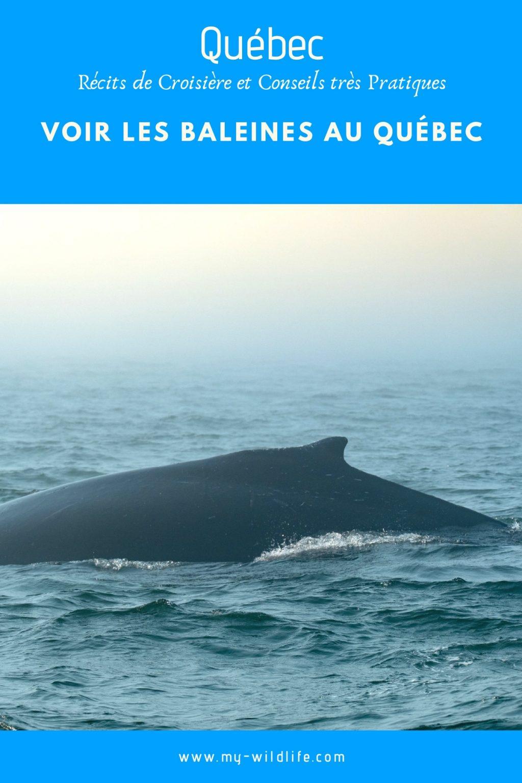 Voir des baleines au Québec