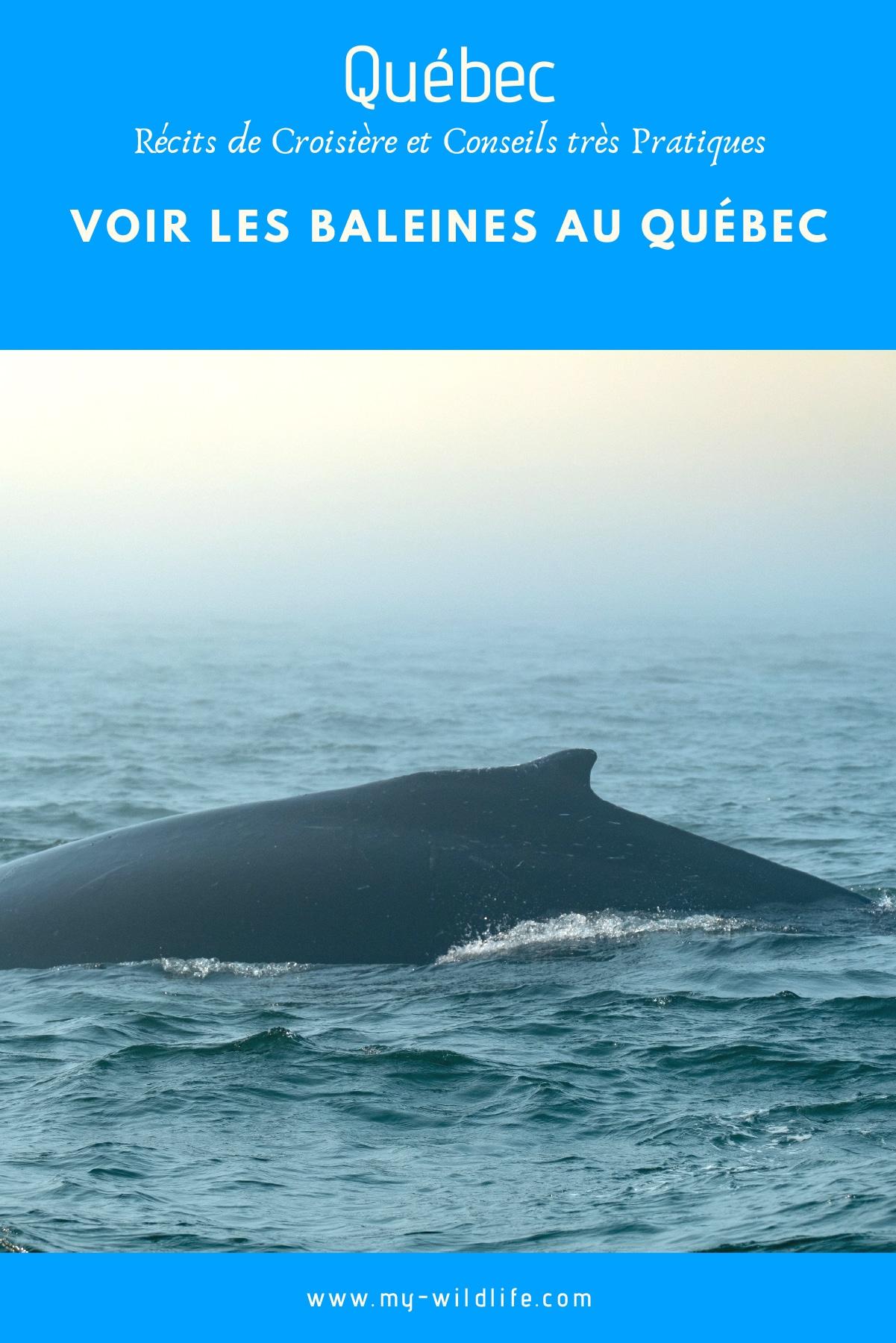 baleine-quebec-03