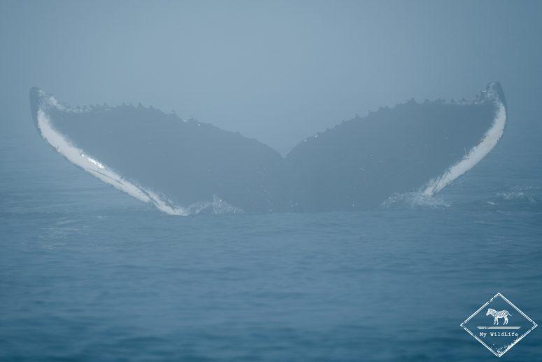 baleines au Québec