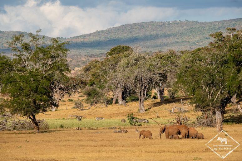 éléphants, Lumo Wildlife Sanctuary