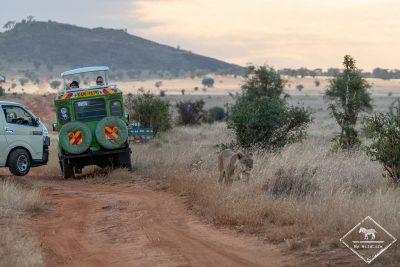 Safari avec le Lions Bluff Lodge