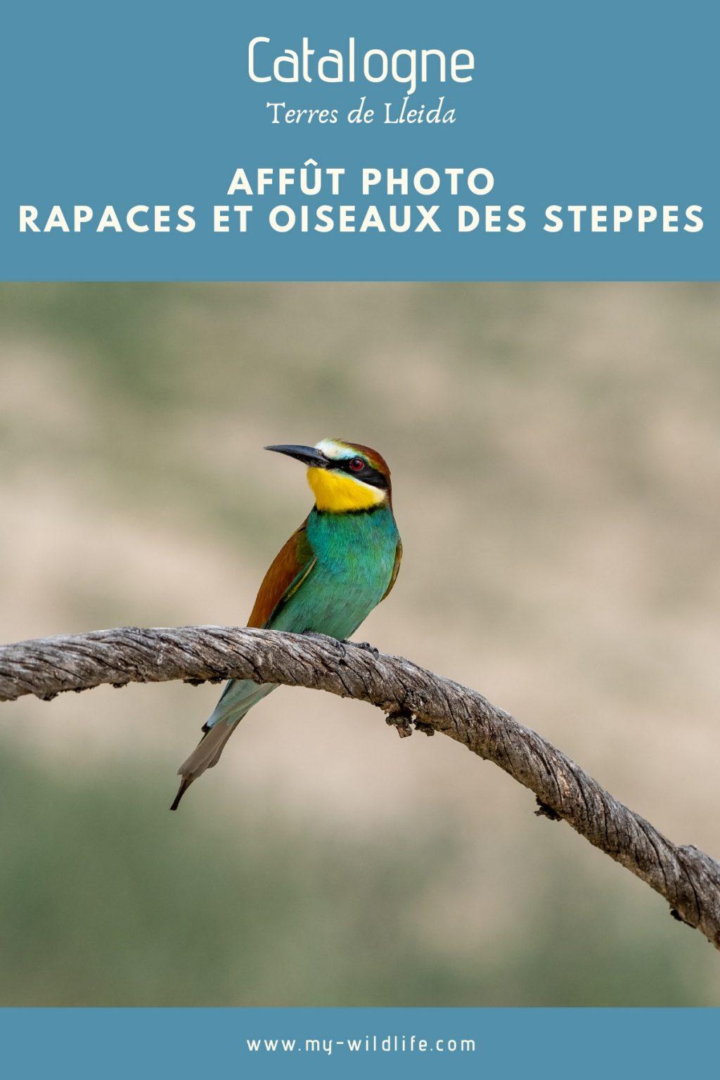 Ornithologie en Catalogne