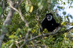 Safari dans le parc National Arusha