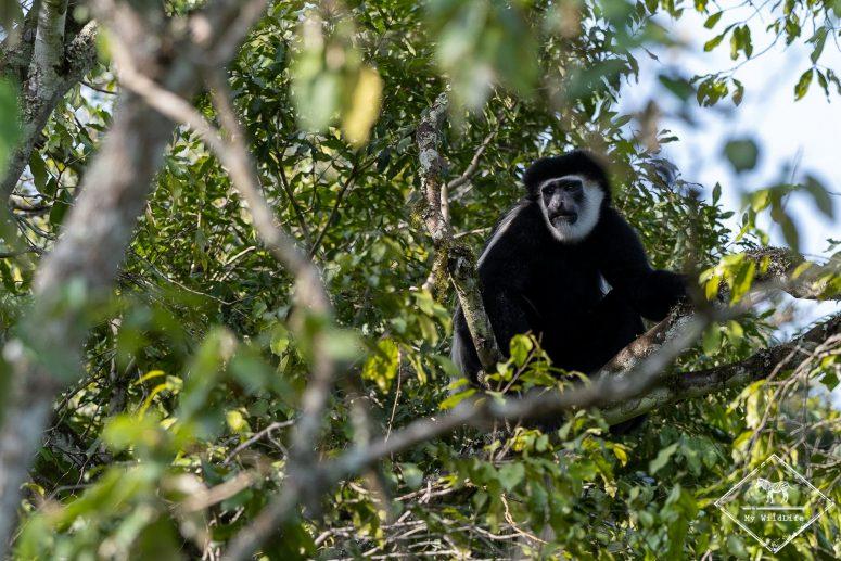 Parc national Arusha