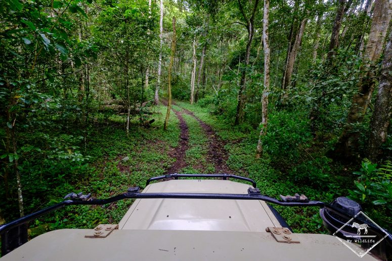 Kilinga Forest Circuit