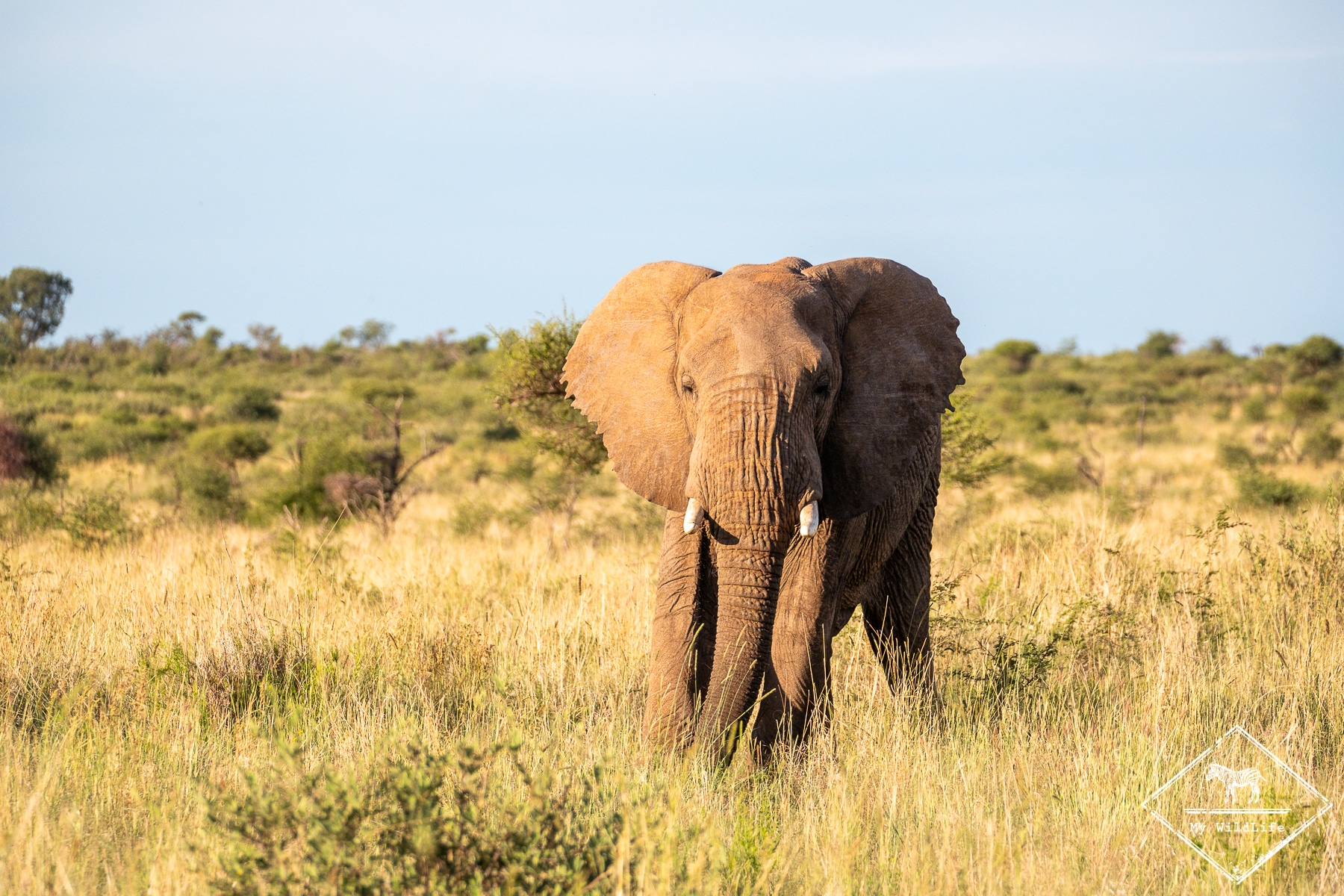 éléphant, Black Rhino Game Reserve
