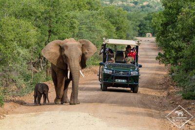 éléphants, Black Rhino Game Reserve