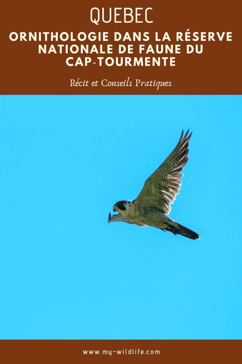 Réserve Nationale de Faune du Cap-Tourmente