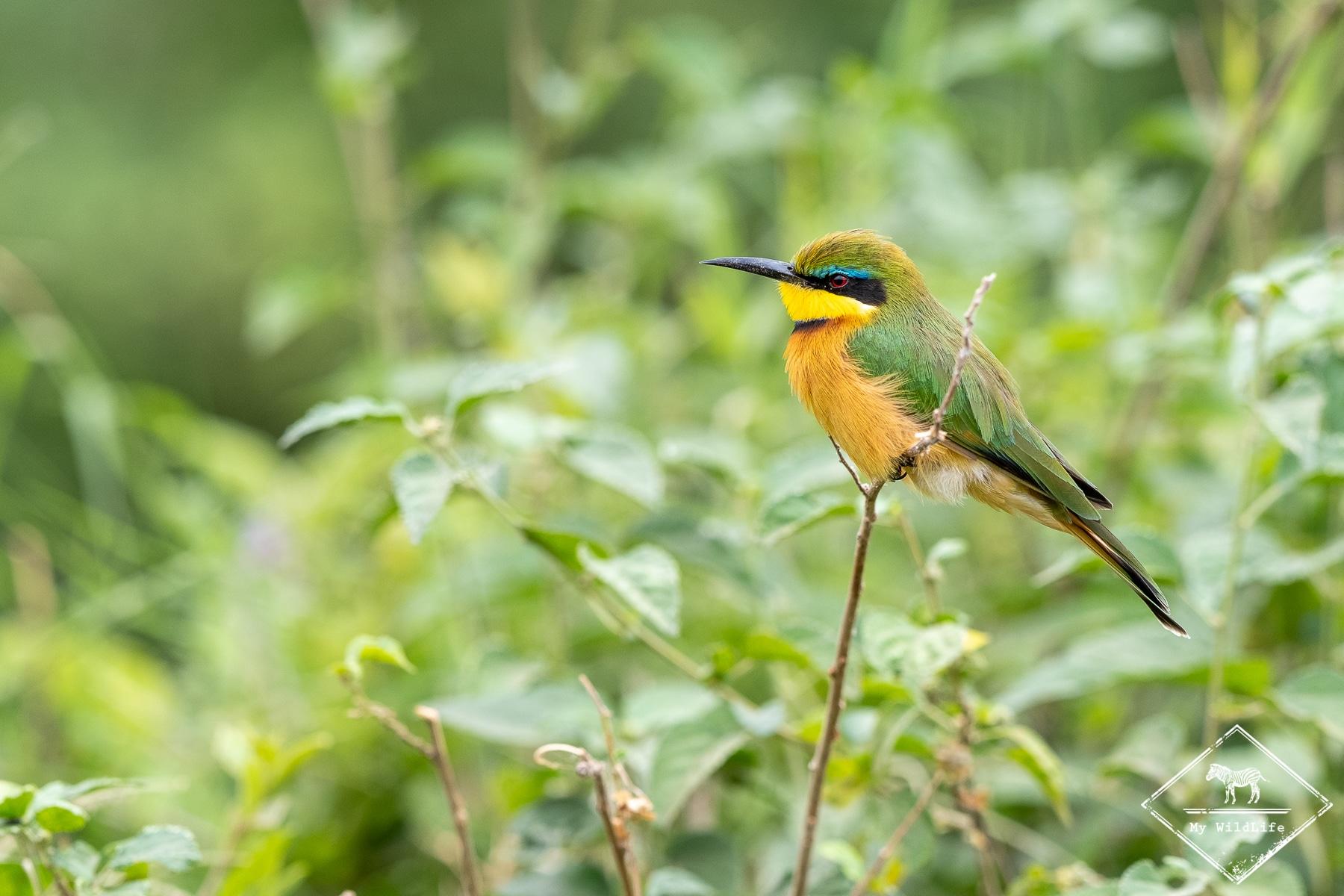 Safari Photo en Afrique du Sud dans les réserves privées du Greater Kruger (Balule, Manyeleti et Timbavati)