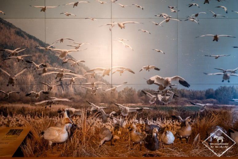 Centre d'interprétation Réserve nationale de faune du Cap‑Tourmente