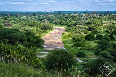 rivière Tarangire