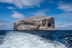 Bass Rock, l'île aux fous de Bassan