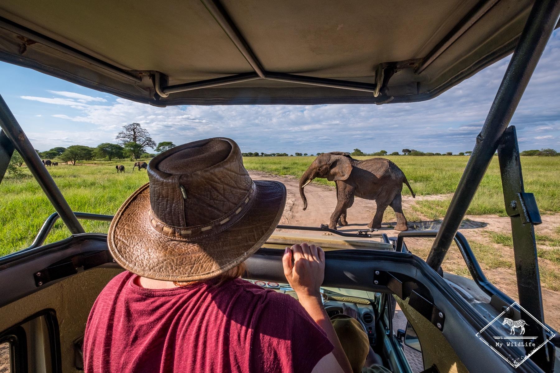 Eléphant, parc national de Tarangire