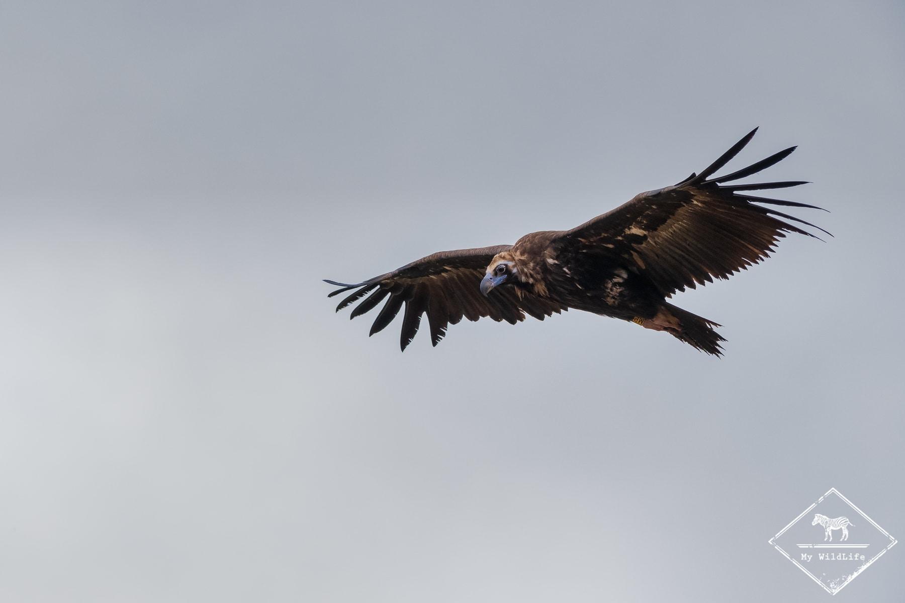 vautours@GregoryRohart--5