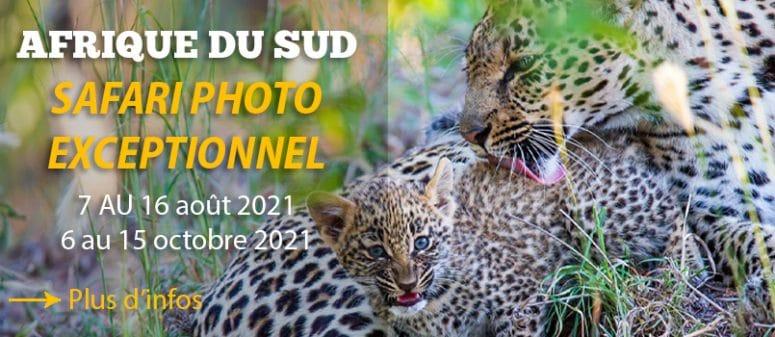 Safari photo en Afrique du Sud