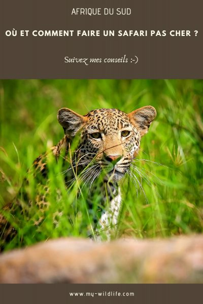 afriquedusud-safaripascher-01