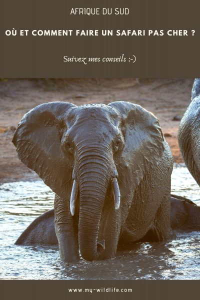 afriquedusud-safaripascher-03