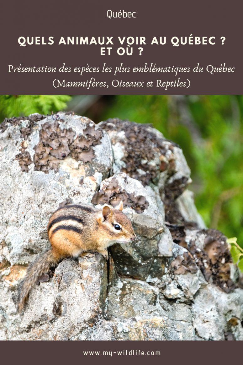 Quels animaux voir au Québec ?