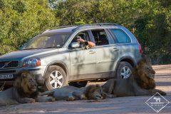 Où et comment faire un safari pas cher en Afrique du Sud ?
