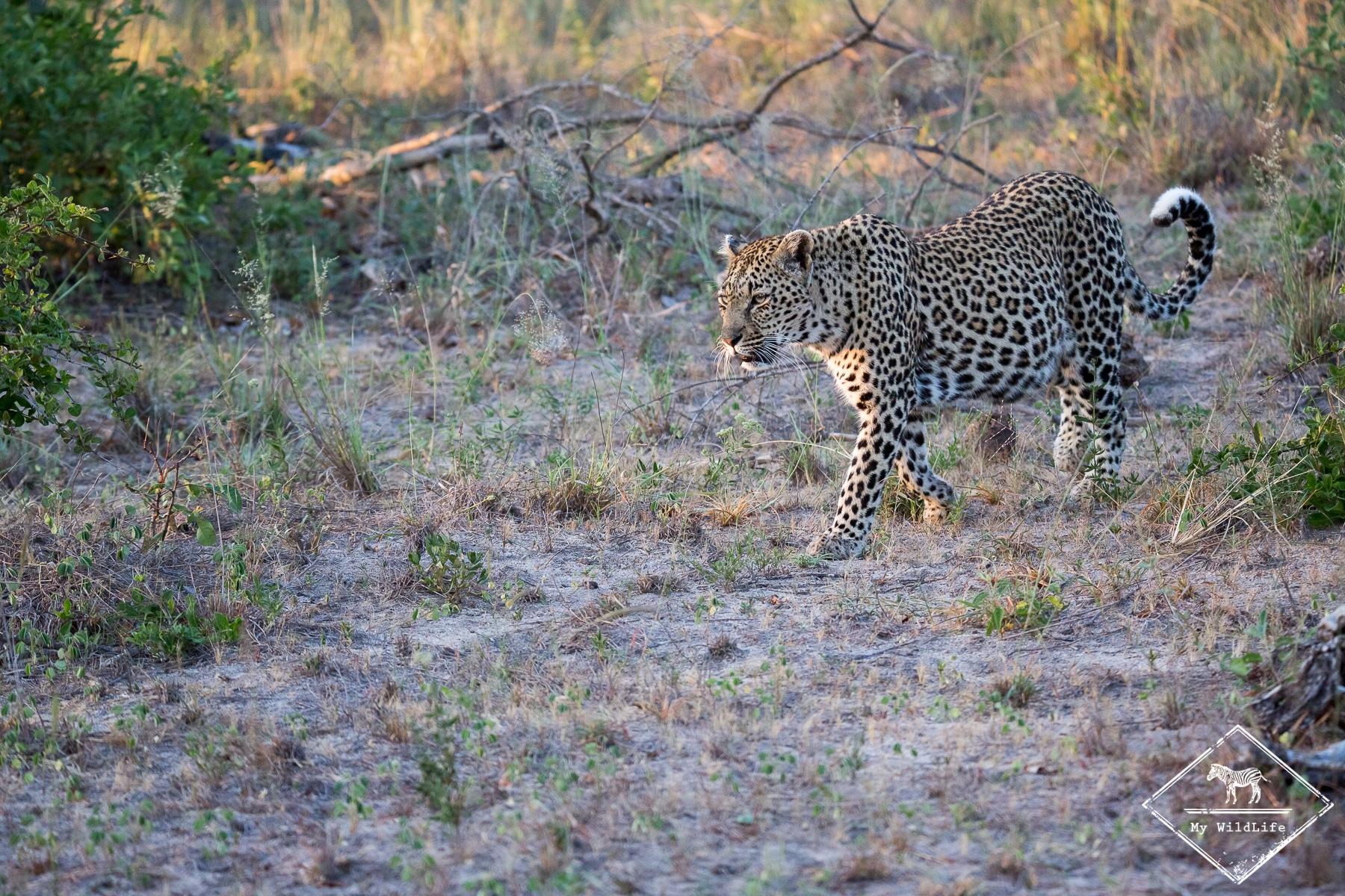 Safari pas cher en Afrique du Sud