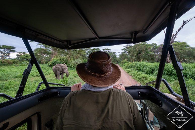 Eléphant, safari au lac Manyara
