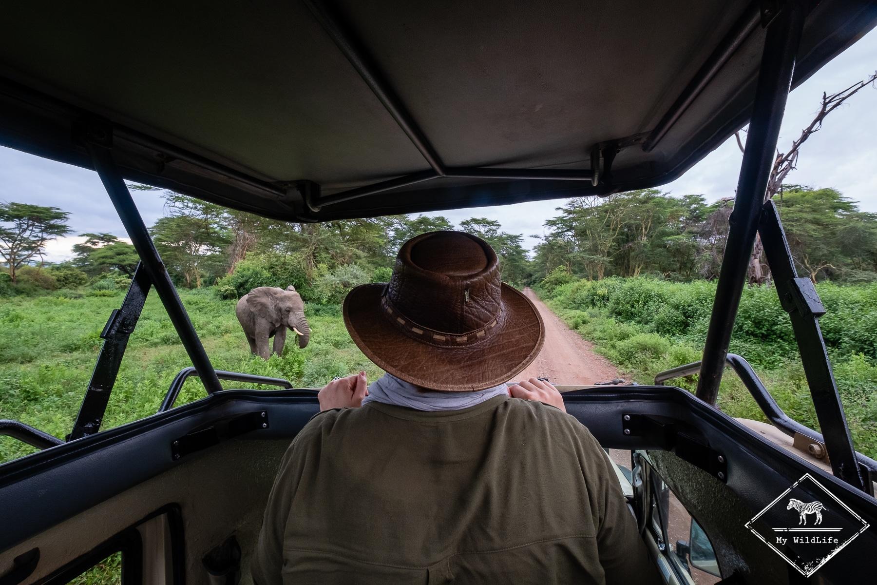 Eléphantt, safari au lac Manyara