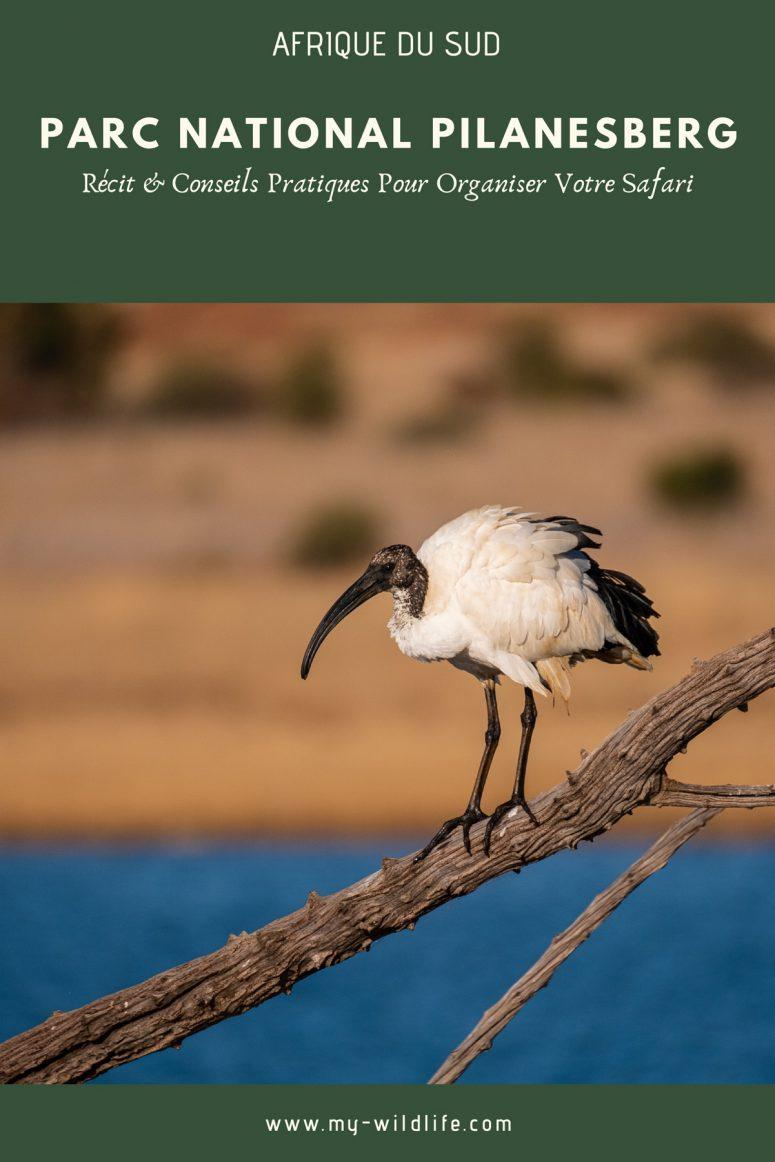 Parc national Pilanesberg