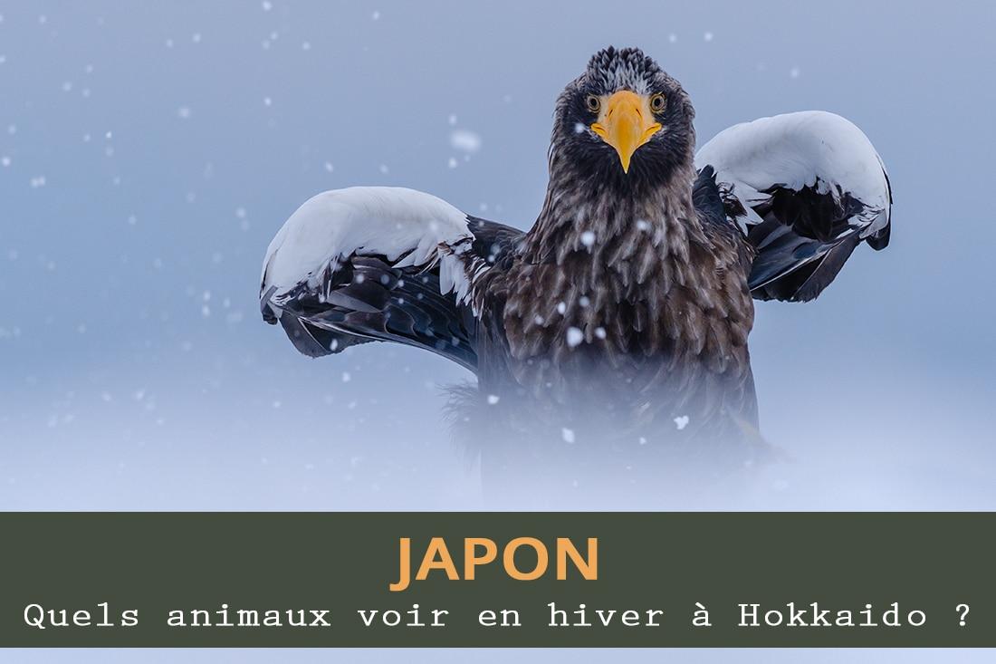 Quels animaux voir en hiver à Hokkaido ?