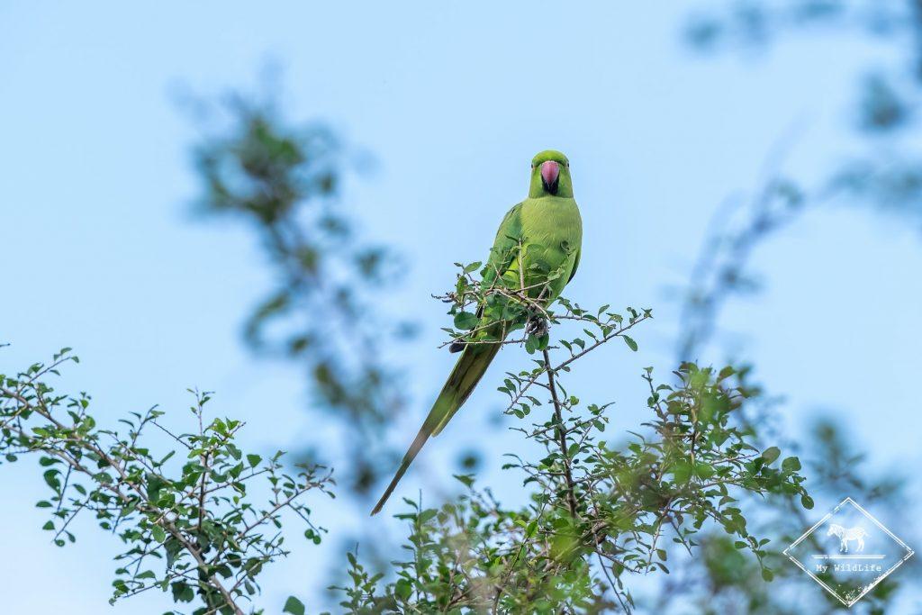 parc national Udawalawe