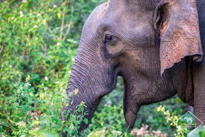 Safari dans le parc national Udawalawe