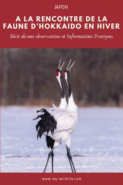 A la rencontre de la faune d'Hokkaido en hiver