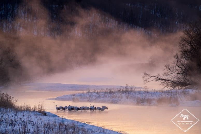 Grues du Japon, Hokkaido