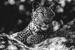 Voyages photo Safari en Afrique du Sud, Sri Lanka, Ecosse, Japon, Espagne
