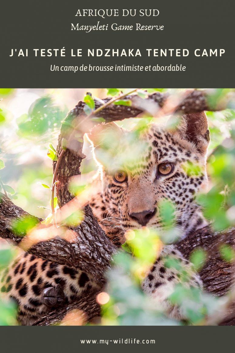 Léopard, Manyeleti