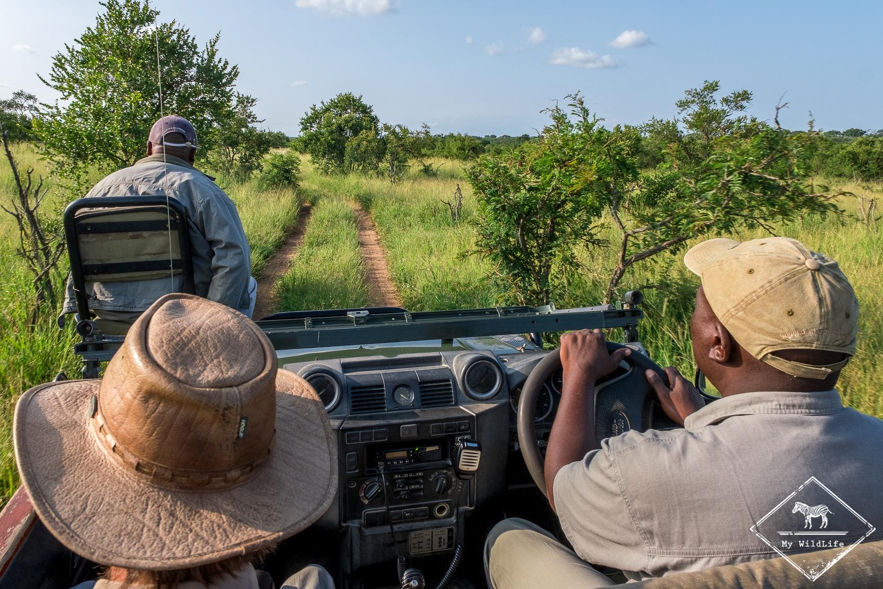 safari dans la Manyeleti Game Reserve