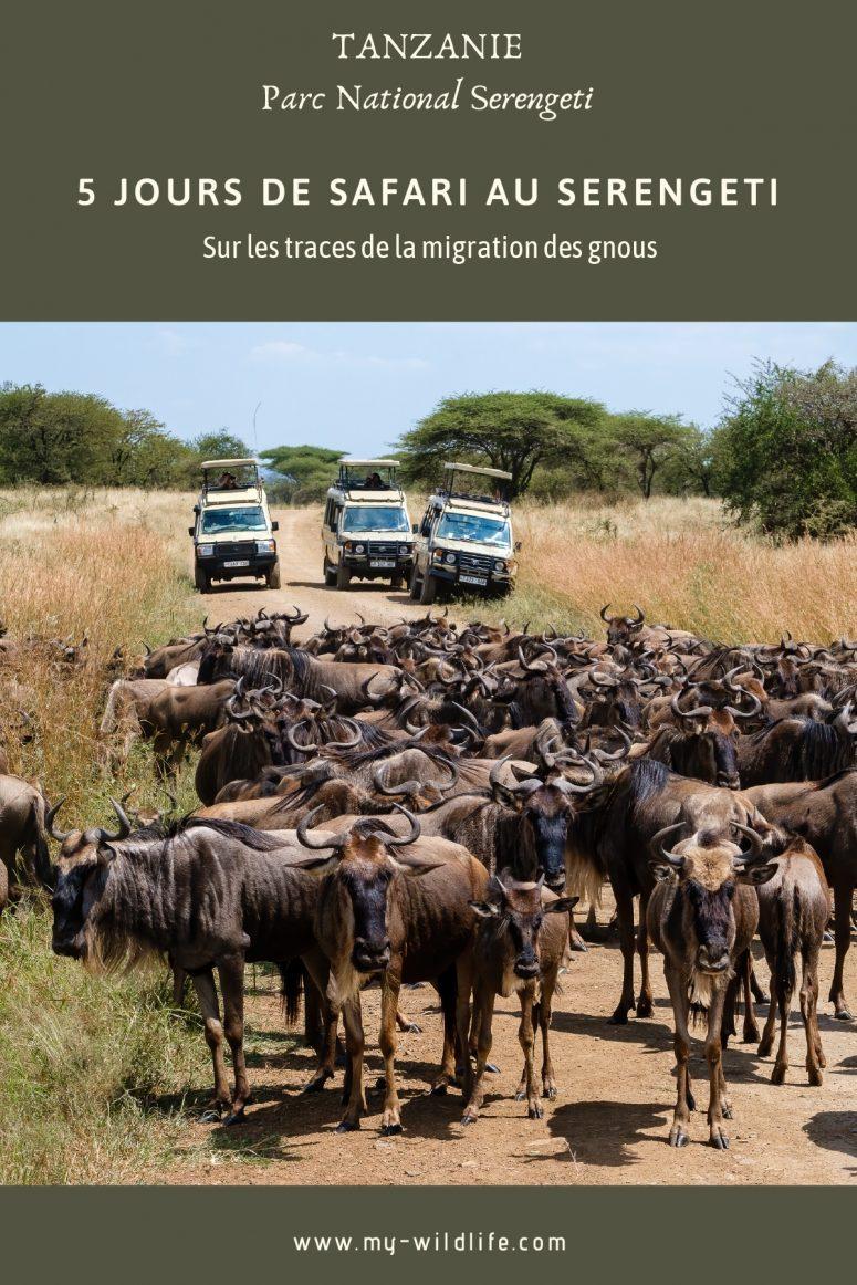 Migration des gnous, Serengeti
