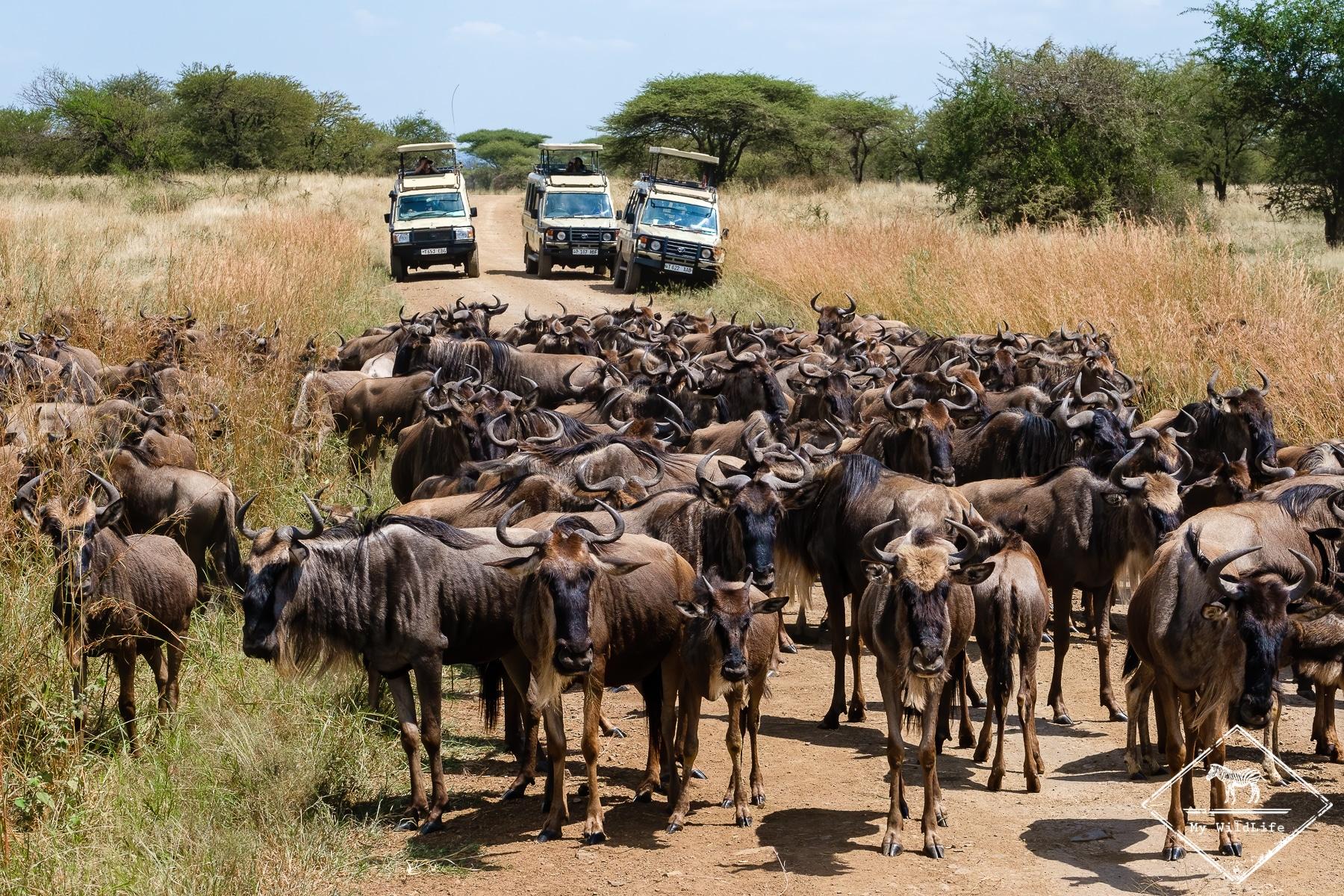 Safari au Serengeti sur les traces de la migration des gnous