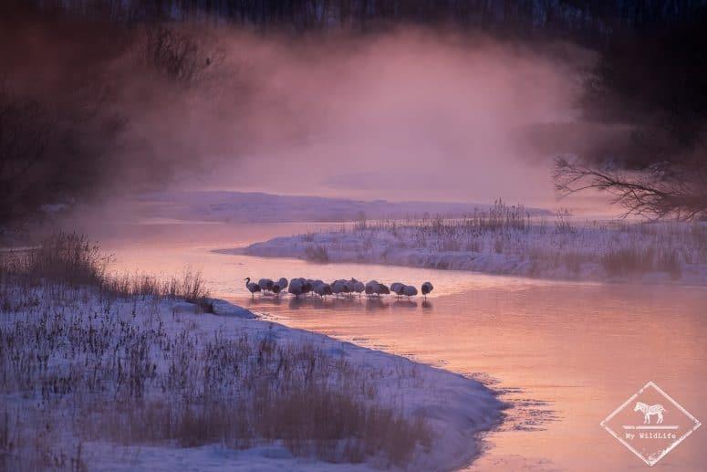 Grues du Japon, Setsuri river