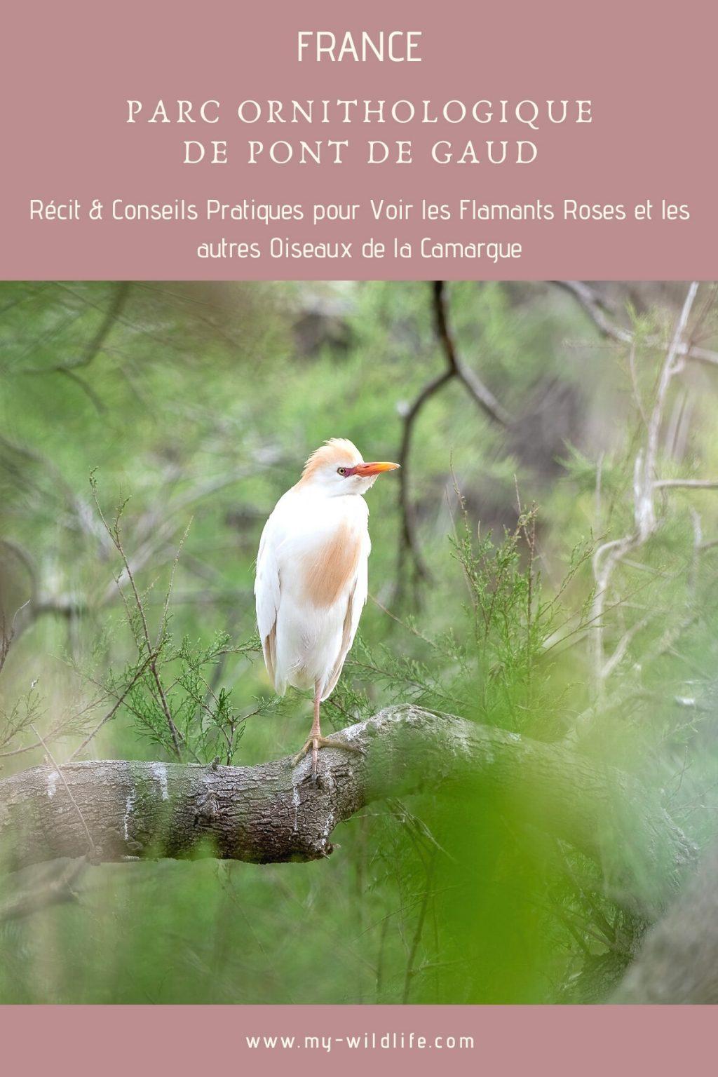 Parc ornithologique de Pont de Gaud