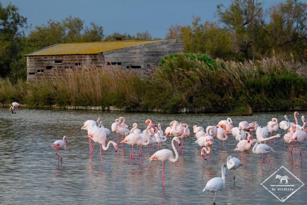 Observatoire du Parc ornithologique de Pont de Gaud