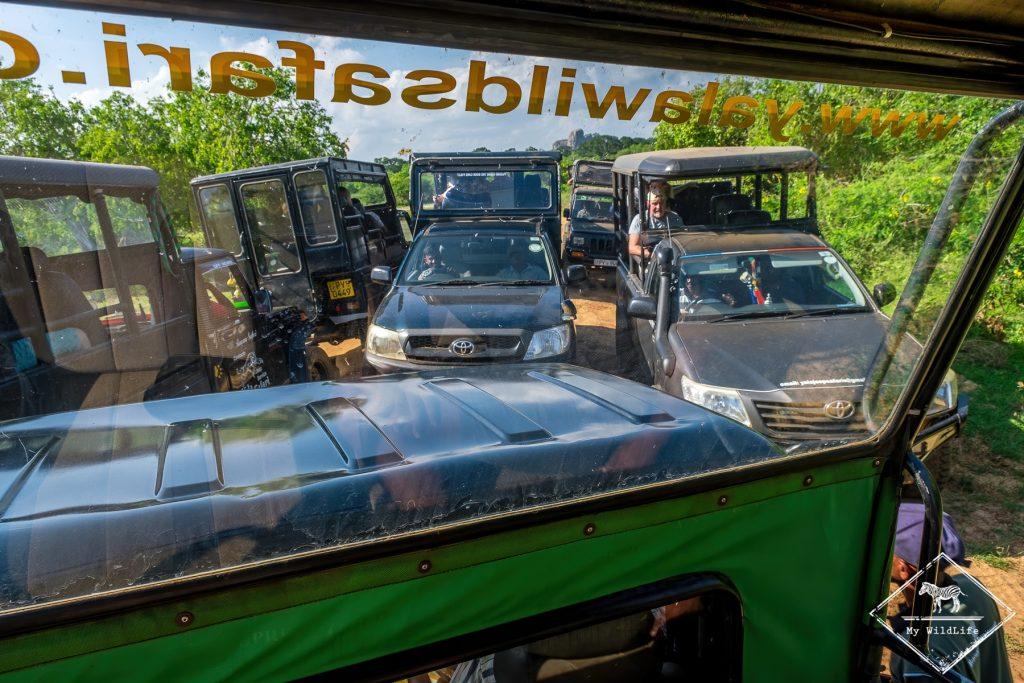 Embouteillage au parc national de Yala